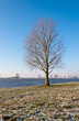 Bare solitary tree on a riverbank in the Netherlands