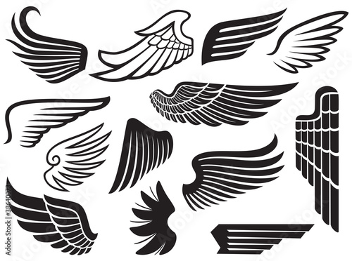 wings collection (set of wings)