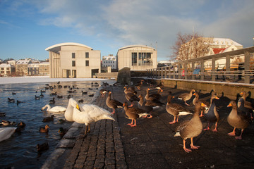 Winter sunshine around Reykjavik city centre