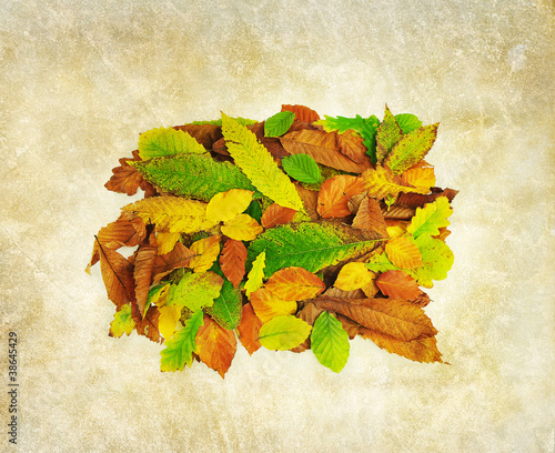 autumn leaves print