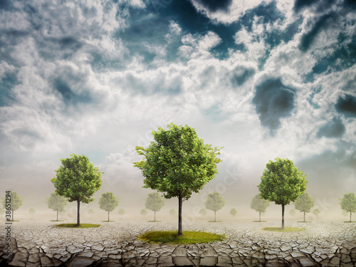 The desert where the trees grow - 38651294