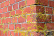old mossy red brick wall corner backdrop