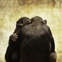 chimps hugging
