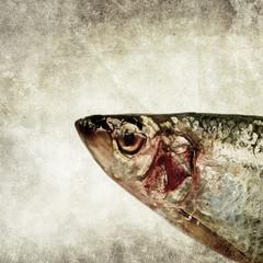 fish head print