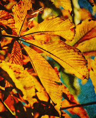 old autumn leaf photo