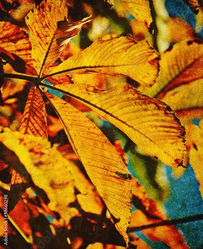 old autumn leaf photo