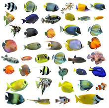 Grupp av tropiska fiskar