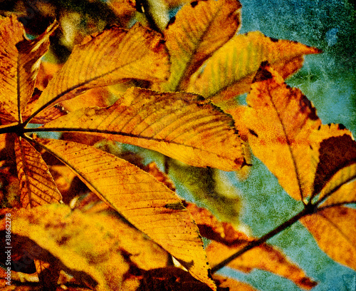 autumn photo print