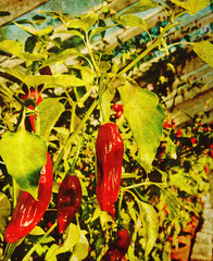 retro chili photo