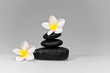 frangipani and black stones