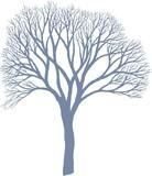 Drzewo - Morwa