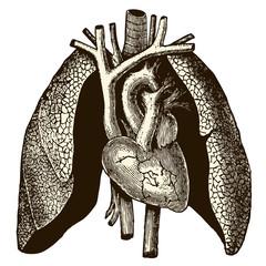 Coeur & poumons