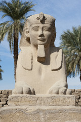 Sphinx at Luxor temple