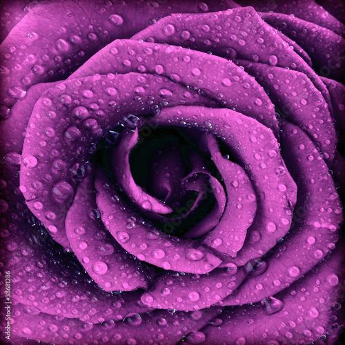 Panel Szklany Purple dark rose background