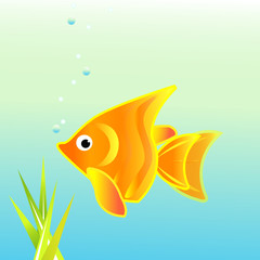 Comet gold fish vector