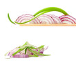 Collection of onions on a white background