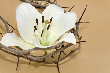 Crown of Thorns and Easter Lily
