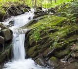 Fototapeta mokry - mech - Rzeka
