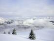 sapins neige et montagnes