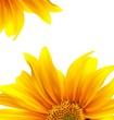 Brochure layout flower background design