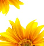 Fototapety Brochure layout flower background design