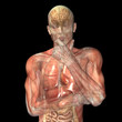 Skeleton X-Ray - Muscsles and Internal Organs - Thinking