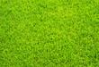 Fussball Rasen - Soccer Grass