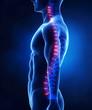 Backbone intervertebral disc anatomy lateral view