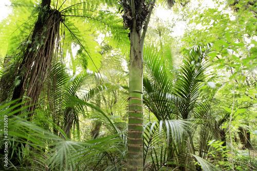 Fototapete urwald  Fototapete Urwald - Rainforest - Wald - Pixteria