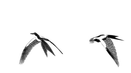 loop animated flying sketch bird in different position