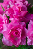 Pink artificial roses made ??of synthetic fiber. poster