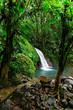 Saut en forêt tropicale