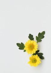 黄色の小菊の背景