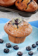 Blueberry muffin with icing sugar