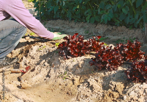 cultivando en huerto