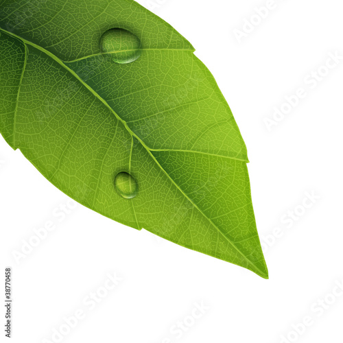 Green leaf with water droplets, closeup vector illustration.
