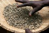 Coffee, grains