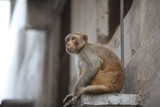 Monkey sitting on the widow pane in Asia poster