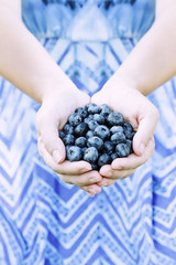 Woman Hands Offering Blueberries