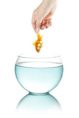Female hand holding goldfish
