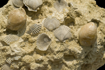Fossilized shells.