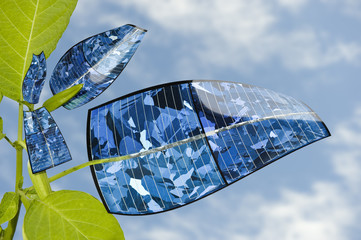 Solar panel plant. Evolution of the leaf.