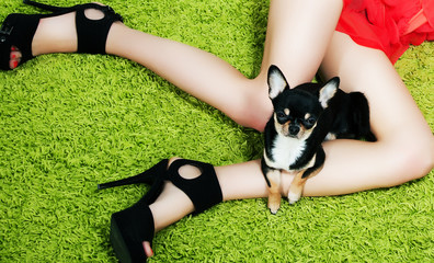 Puppy with paws hugging over woman's lovely feet