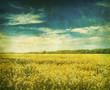 retro mustard field