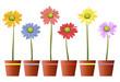 Bunte Blumen mit Topf