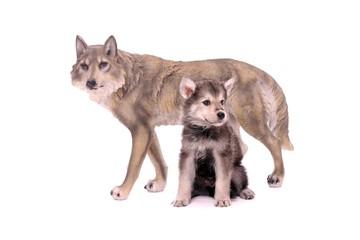 Wolfshund Welpe mit Wolfsfigur sitzend rechts