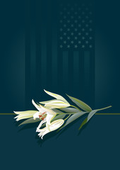 Floral tribute – white lily laid on a patriotic background