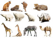 Set of  animals. Isolated over white