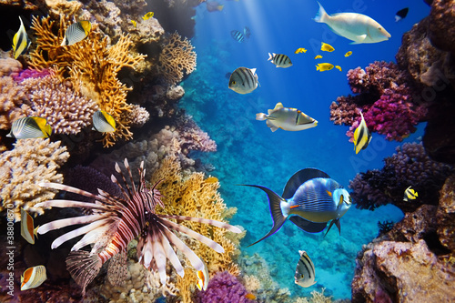 koralowa-kolonia-i-koralowa-ryba