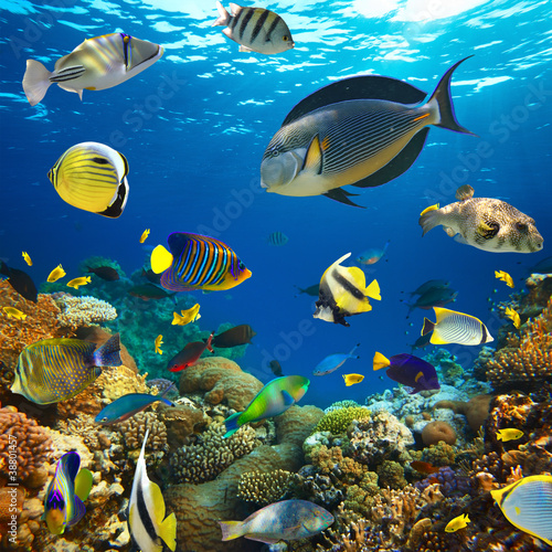 Coral colony and coral fish - 38801457